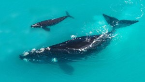 [img] whales South Africa