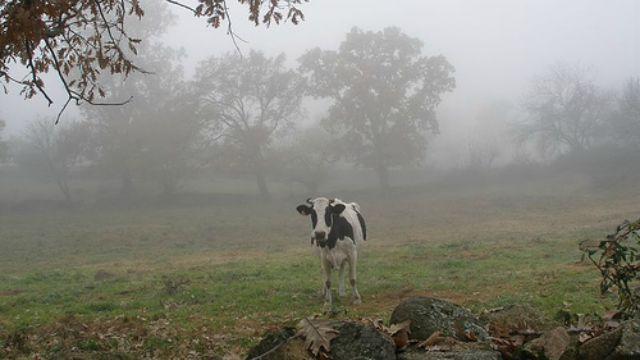 Resultado de imagen para lluvias en el campo