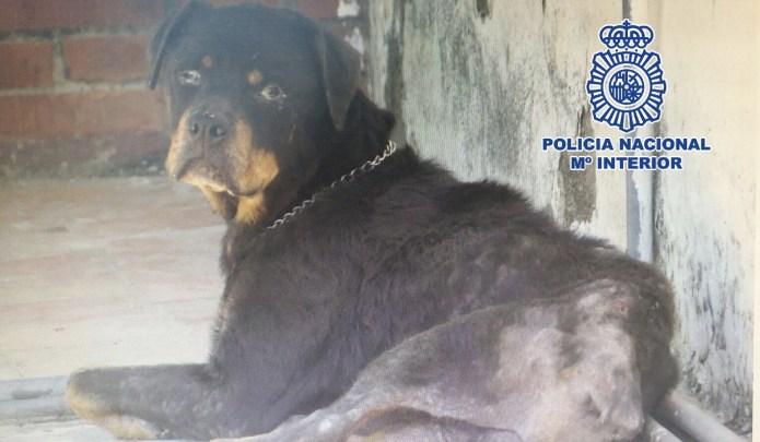 La Policía Nacional detiene en Vélez-Málaga a una mujer por maltrato animal y rescata a su perra encerrada en una azotea