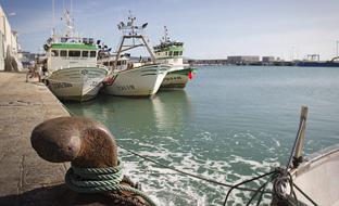 La Junta reabre la mayoría de los caladeros de Málaga para el marisqueo tras los resultados negativos de los análisis realizados