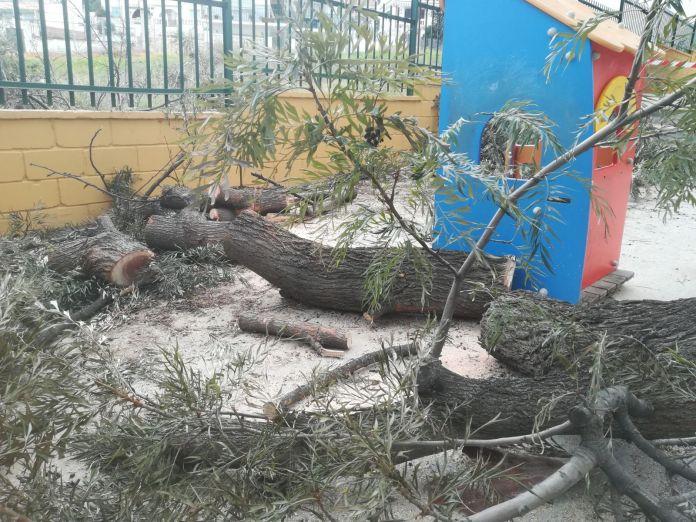 El viento provoca la caída de varios árboles en el municipio