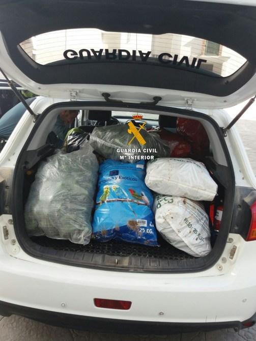 La Guardia Civil de Málaga desarticula un grupo delictivo dedicado al robo y receptación de aguacates en la Axarquía