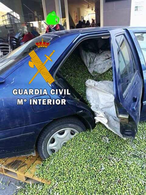 La Guardia Civil desarticula un grupo delictivo de 71 integrantes dedicado al robo y receptación de aceitunas que actuaba en Andalucía