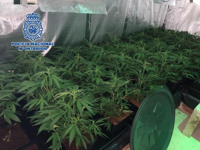 La Policía Nacional desmantela un laboratorio para el cultivo y elaboración de marihuana en una vivienda de la barriada de El Palo e interviene 97 plantas