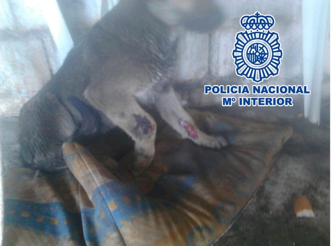 La Policía Nacional detiene en Vélez-Málaga a 10 personas por maltratar a 16  perros en fincas y viviendas de la localidad