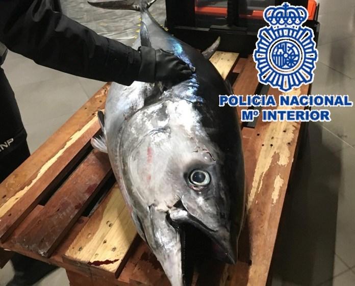 La Policía Nacional decomisa en Estepona dos atunes rojos que eran transportados en una furgoneta sin cumplir las condiciones de salubriddad
