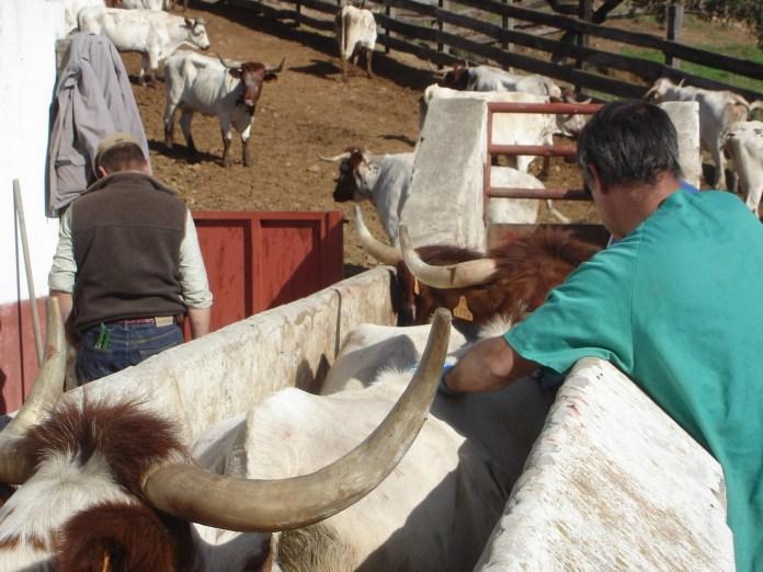 La Junta respalda la ejecución de programas de sanidad animal con 4,6 millones en ayudas