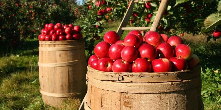 agricultura colorado pixabay