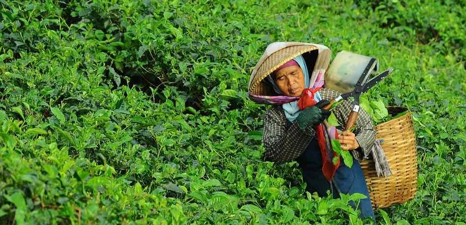 ibisa agricultura pixabay