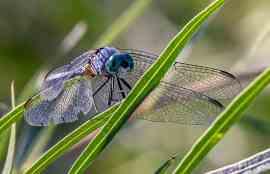 Dragonfly Unsplash Defi NFT