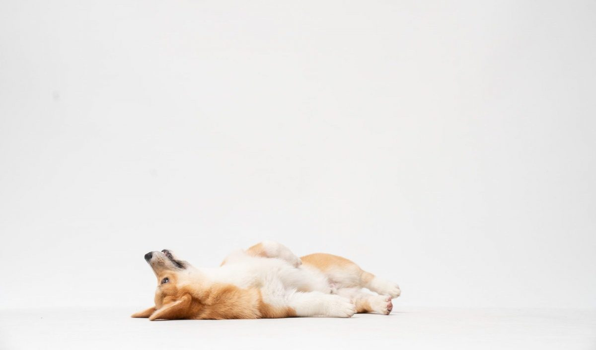 DOGE-unsplash