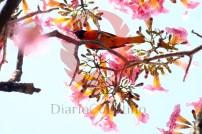 -Galeria colores Verano 7 copy
