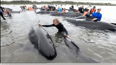 Encallan centenares de ballenas en Nueva Zelanda