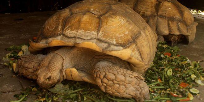 Parque zoológico prioriza atención  y cuido de especies