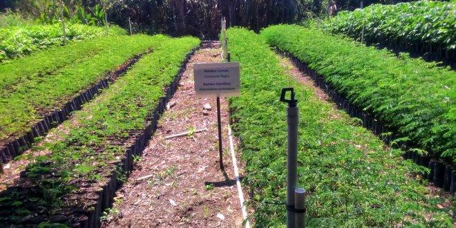 Más de 1.1 millones de plantas listas para reforestar El Salvador