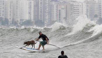 c0a474bc3 Cão surfista Parafina disputa campeonato na Califórnia