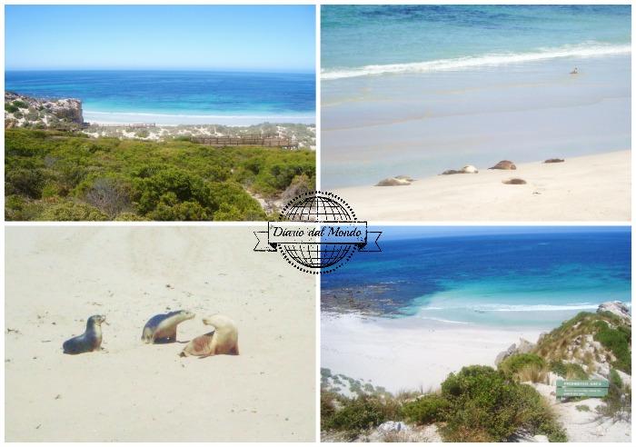 Kangaroo Island in 3 giorni - seal bay
