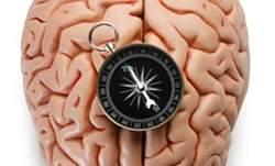 Vendendo a alma: cérebro processa valores sagrados por outras vias