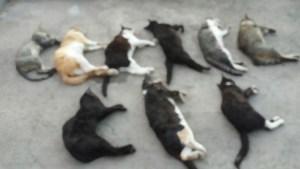 Aparecen en Pilar de la Horadada nueve cadáveres de gatos en un contenedor de basura