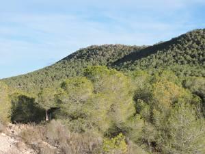 Más de 1.000 personas desempleadas trabajarán en tareas de conservación de los montes gracias a una subvención de Labora