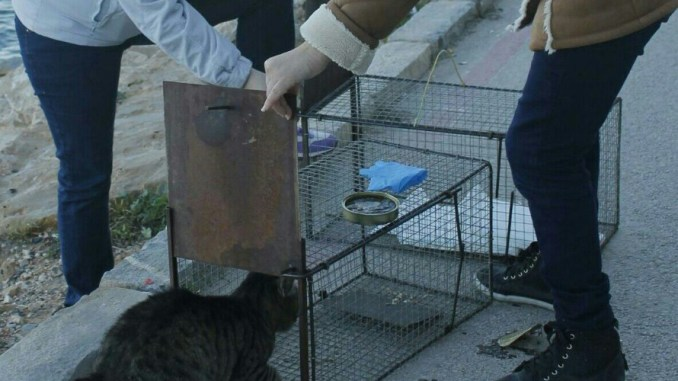 gatos castracion