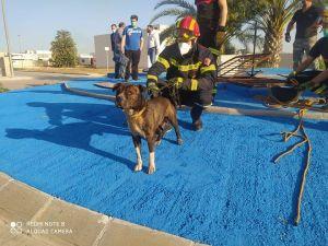 Los bomberos rescatan a un perro tras caer en una acequía y recorrer desde Callosa hasta Cox
