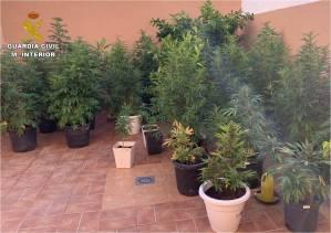 La Guardia Civil descubre una plantación de marihuana en el patio interior de una vivienda en Bigastro