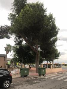 """Cambiemos Orihuela alerta de la intención de talar dos árboles de gran porte en Correntías """"para beneficio de una casa de apuestas"""""""