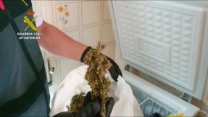 Detienen a una pareja en Torrevieja que utilizaba sus armarios como invernaderos de marihuana