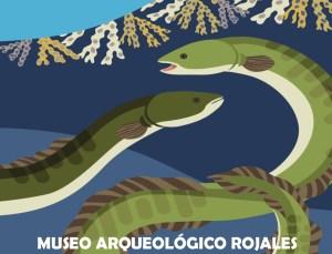Una exposición descubre los misterios de la anguila europea y su relación con la Vega Baja
