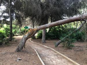 El PSOE reclama limpieza y mantenimiento para recuperar la pinada de Campoamor