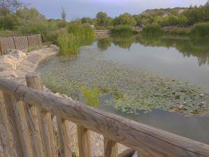 El Recorral de Rojales se convierte en un parque botánico fluvial