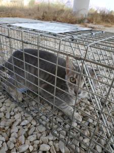 Sanidad inicia la campaña de esterilización de gatos sin propietarios en todo el municipio de Orihuela