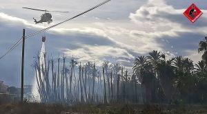 Se incendian 7.000 metros cuadrados de un vivero de palmeras en Albatera
