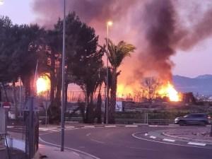Se produce un incendio de 5.000 metros cuadrados en una plantación de palmeras en Bigastro