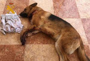 Dos detenidos, uno de ellos en San Miguel de Salinas, por extorsionar a un joven de Albacete hiriendo a su perro