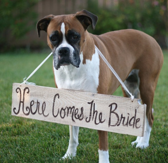 Here comes the bride sign4