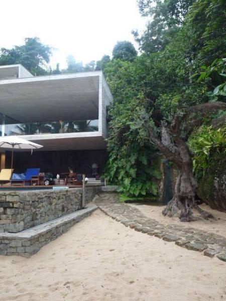 Oliveira uruguaia à beira da piscina: ambas plantadas em praia grilada