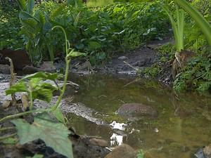 Açudes que devem receber as águas São Francisco também recebem esgoto (Foto: Wellington Campos/TV Cabo Branco)
