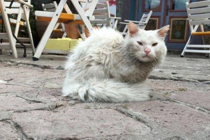 gato irak
