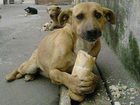 perro-de-la-calle