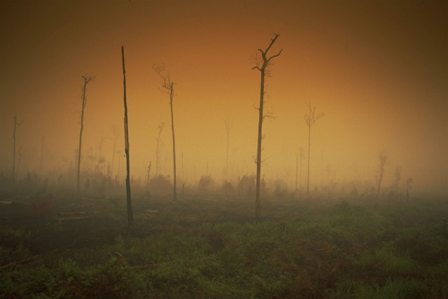Rainforest on fire due to climate change effects from El Nino. Jambi Province, Sumatra, Indonesia