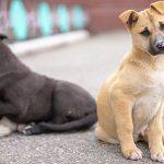 Anuncian obras del primer Hospital Público Veterinario en RM: recinto tratará a animales abandonados