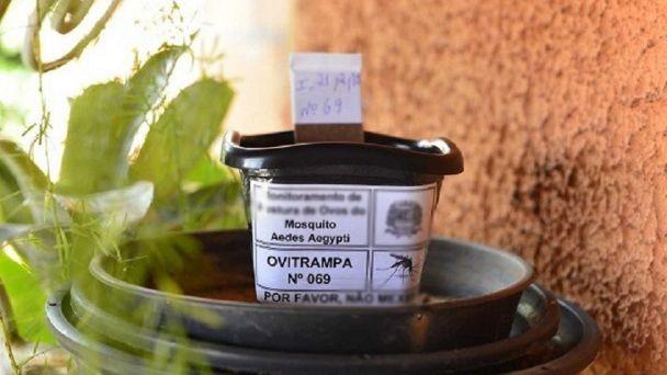 Ovitrampas, el sencillo aliado para detectar hasta dónde llegó el mosquito  del dengue en San Juan   Diario La Provincia SJ