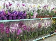 No Dia de Finados, Coop oferece de 100 a 150 variedades de flores e plantas