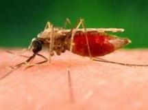 Novos exames descartam casos de malária em Ilhabela, diz Secretaria da Saúde
