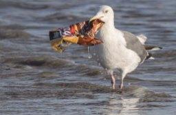Pássaro segura embalagem de plástico com o bico. Foto: Arquivo