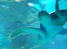 Sabina recebe tartaruga marinha resgatada em praia do litoral carioca
