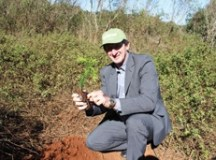Sicredi planta nove mil árvores e conclui ação para neutralizar impacto ambiental de agências