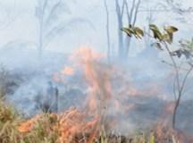 Aumento no número de queimadas está ligado a alta de desmatamento, aponta estudo